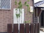 ソヨゴ(株立) 植栽