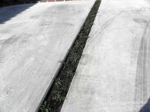 「植栽 タマリュウ」の画像検索結果