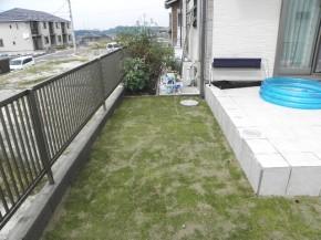 芝張 完了 目土が見えますが、乾燥防止の為です。