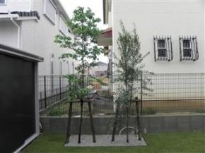 ハナミズキ・オリーブ植栽