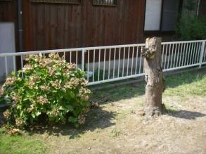 樹木の抜根工事 着手前です。