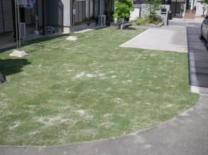 芝張完了です。