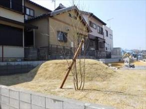 造成地に芝張 エゴノキ植栽