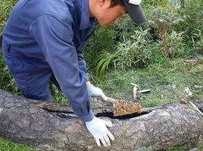 樹木の補修 ウッディドクターを詰めています。